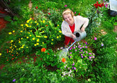 Woman watering her garden — Stock Photo