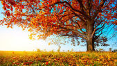 Autumn oak — Stock Photo