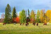 Herd — Stock Photo