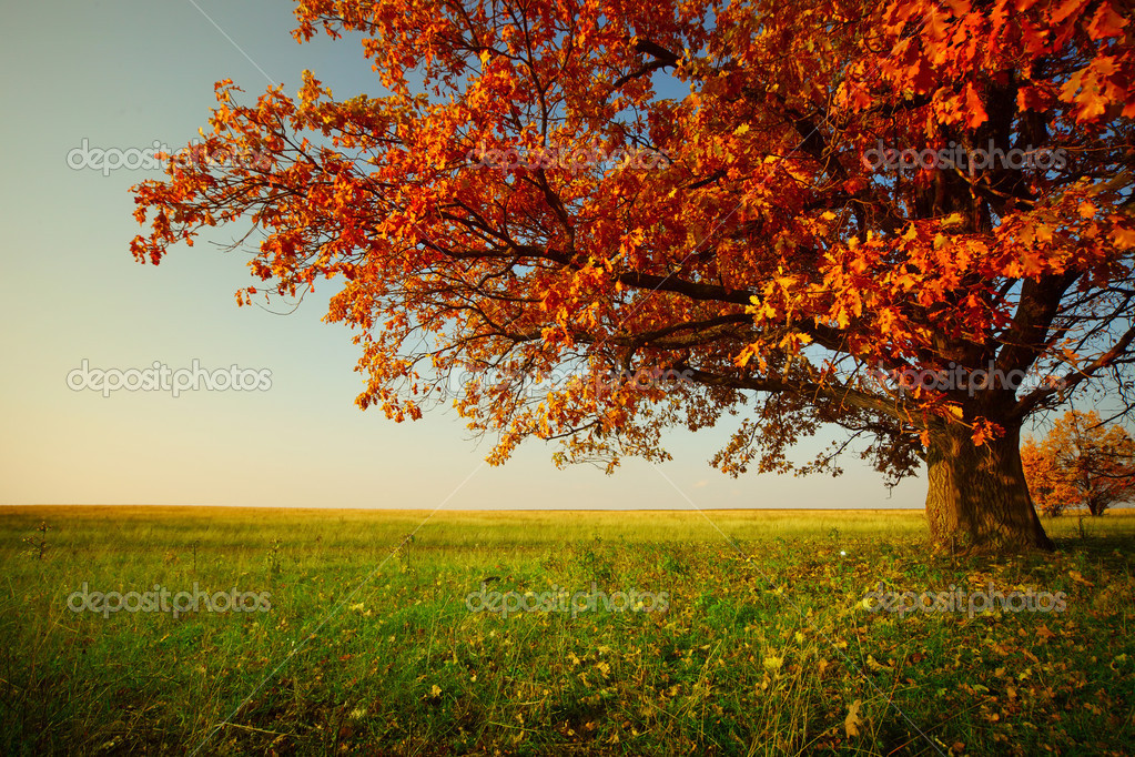 Big autumn oak and green grass on a meadow around — Stock Photo #8149810