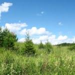 Wild meadow — Stock Photo #8151480