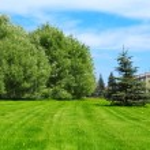 Lawn — Stock Photo #8151558