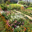 Garden with flowers — Stock Photo