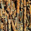 Royalty-Free Stock Photo: Rust