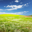 Meadow — Stock Photo #8152097