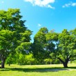 Trees — Stock Photo #8152205