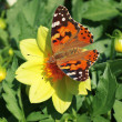 Butterfly — Stock Photo #8152327