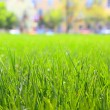 Grass - 