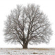 Tree — Stock Photo #8152669