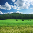 Meadow — Stock Photo #8152782