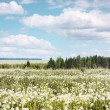 Meadow — Stock Photo #8152820