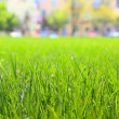 Grass — Stock Photo #8152931