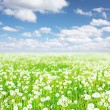 Meadow — Stock Photo #8153174