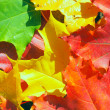 Leaves — Stock Photo #8153199