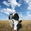 Cow on meadow — Stock Photo #8155509