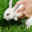 Rabbit - Stock Photo