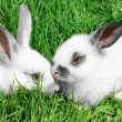 Stock Photo: Rabbits
