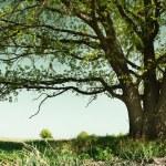 Tree — Stock Photo #8156574