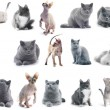 Royalty-Free Stock Photo: Cats over white