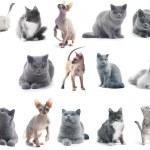 kočky nad bílá — Stock fotografie