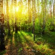 Forest — Stock Photo #8157036