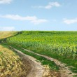 Road in field - 