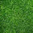 Grass — Stock Photo #8157196