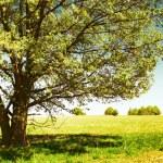 Tree — Stock Photo #8157301