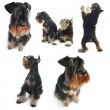 Collection of a dogs shoots — Stock Photo