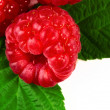 Raspberry — Stock Photo #8157625