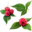 Raspberry — Stock Photo #8157631