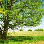 Tree — Stock Photo #8157642