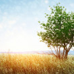 Tree n sun — Stock Photo