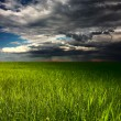 Stock Photo: Storm over meadow