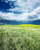 Field with grass — Stock Photo