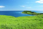 łąka i morze — Zdjęcie stockowe