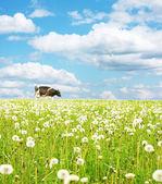 Vaca caminando en prado verde — Foto de Stock