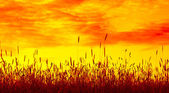 Stems of wheat — Stock Photo