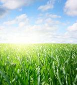 трава — Стоковое фото