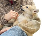 Little dog — Stock Photo