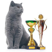 Cat with awards — Stock Photo
