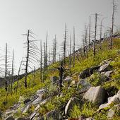 árvores — Foto Stock