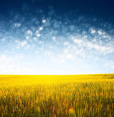 Field and sky — Stock Photo