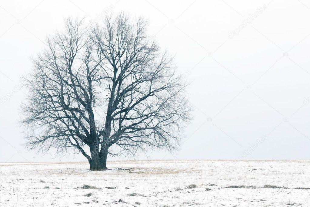 Alone bare tree on autumn field with rare snow — Stock Photo #8156135