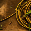 Stock Photo: Yellow garden hose