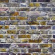 Brick wall — Stock Photo #9694269