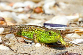 Bright green lizard — Stock Photo