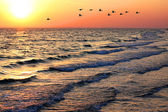 Seascape with ducks at sunset — Stock Photo