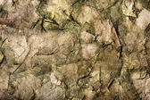 Background of the old dry leaves in a dirty-green hues — Stock Photo