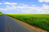 Asphalt road along the wheat fields on a summer day — Stock Photo